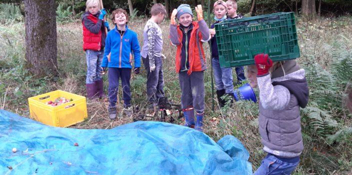 Apfelernte im Apfelkamp Blomberg